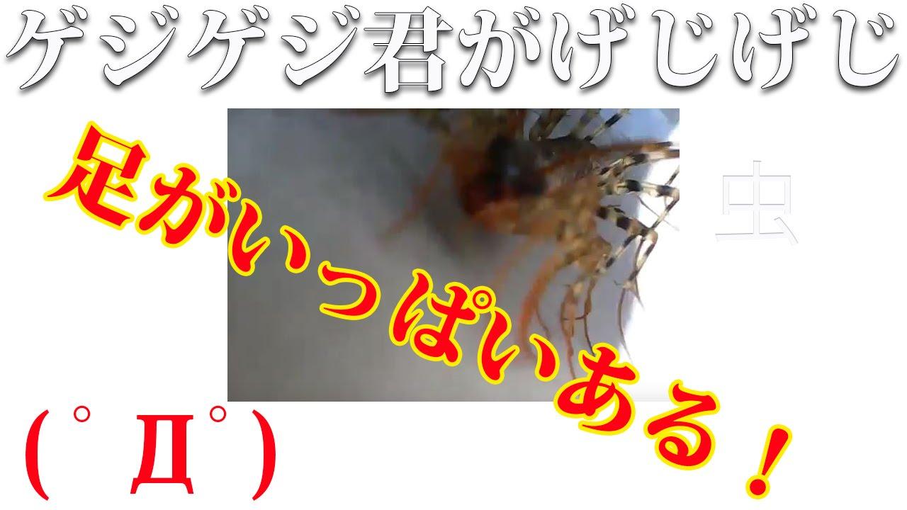 【閲覧注意!!】迫りくる巨大昆虫!