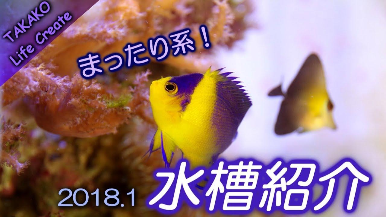 ゆる~く一人暮らしのサンゴ水槽紹介【マリンアクアリウム】