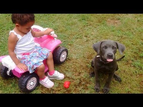 【涙腺崩壊】飼い犬を捨てた女性に対する手紙を公開