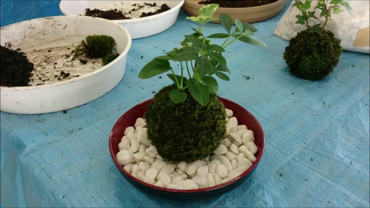 苔玉づくり 新潟農業・バイオ専門学校