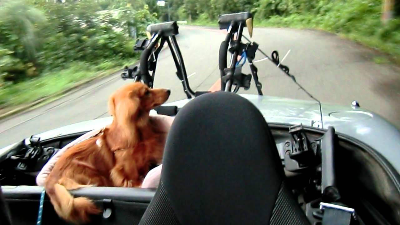 犬とロ-ドスタ-
