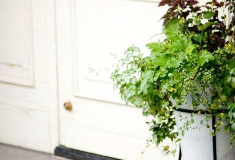 癒しのグリーン(観葉植物)の選び方と育て方