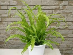冬でもトイレで育てられる観葉植物は